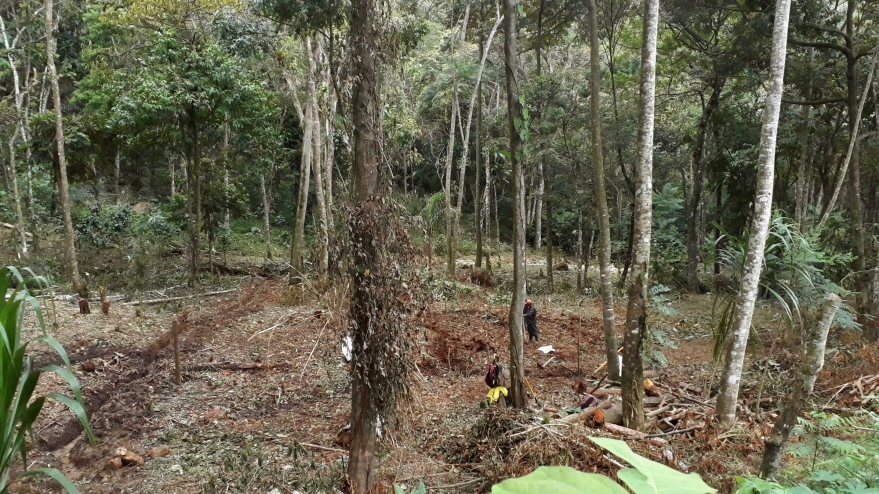 starting excavation